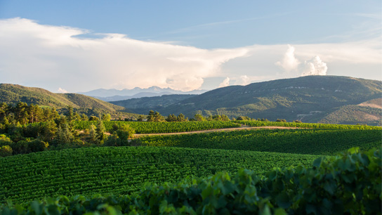 Domaine de Baronarques Languedoc